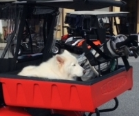Puppy Golf Cart
